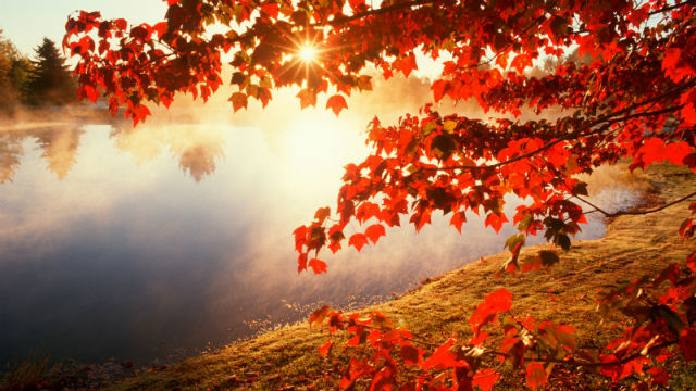 Red autumn morning